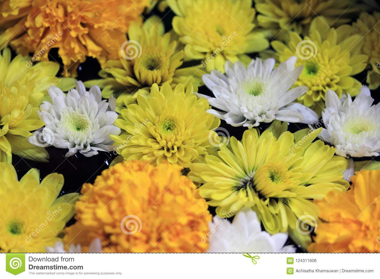 Closeup yellow marigold flower with white and yellow dandelions download closeup yellow marigold flower with white and yellow dandelions floating on the water in the mightylinksfo