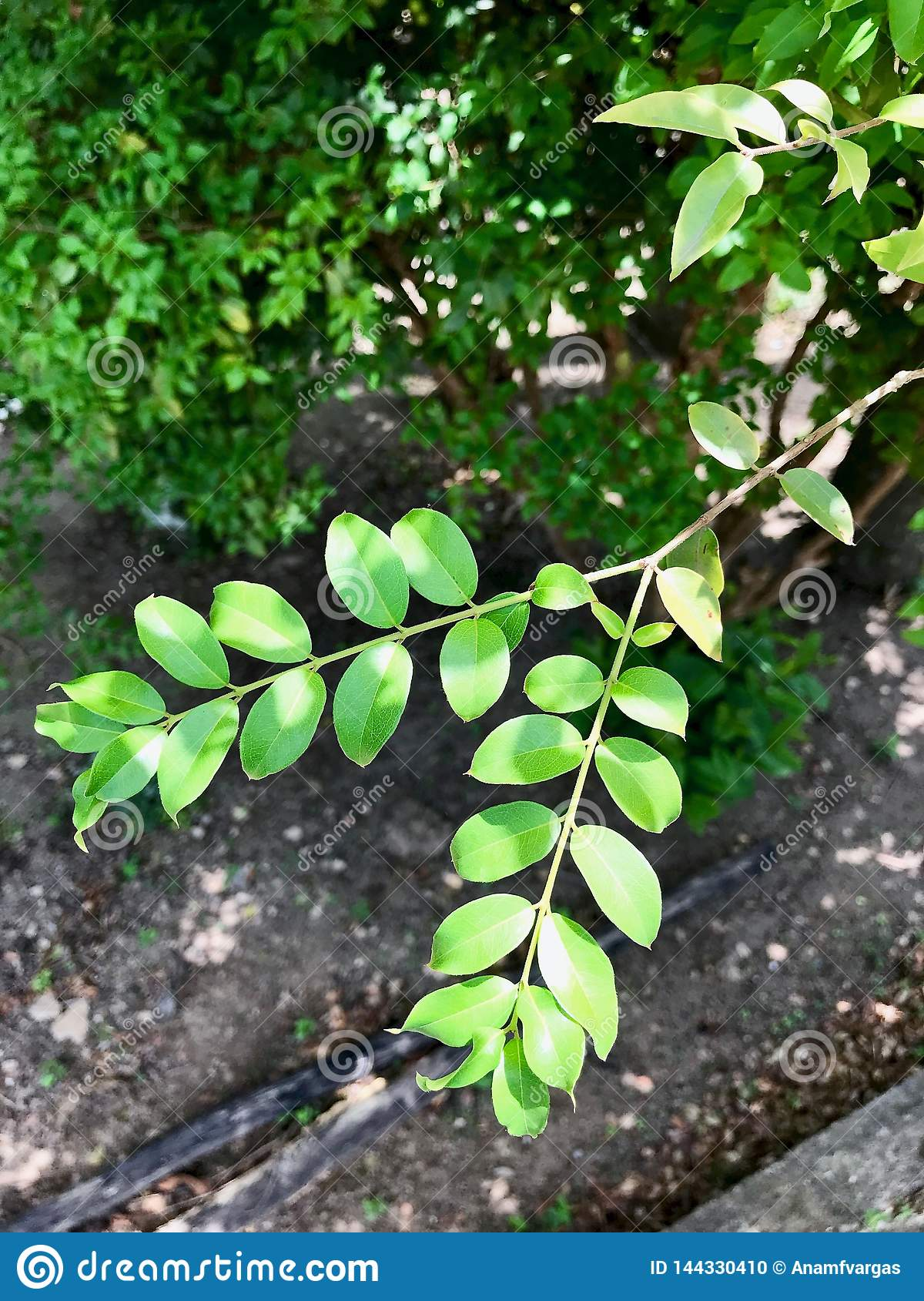 Closeup of a young green leaf