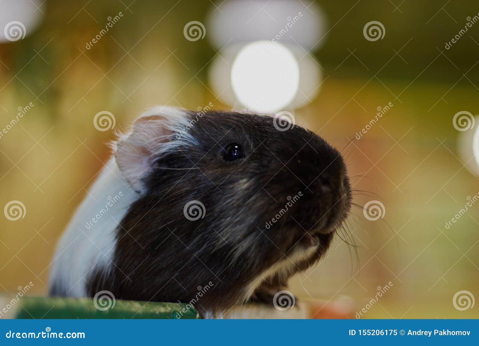 Closeupförsökskaninhuvud Kontaktzoo oskadliga djur djur gyckel
