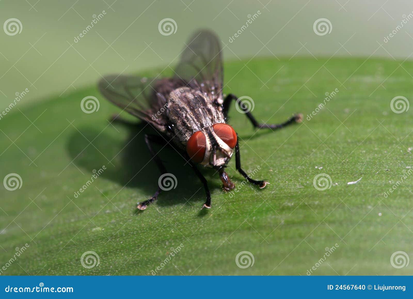 Closeupflugor