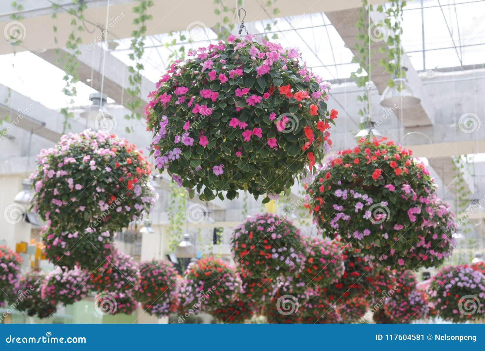 Closeupfoto av att hänga härliga blomma blommor