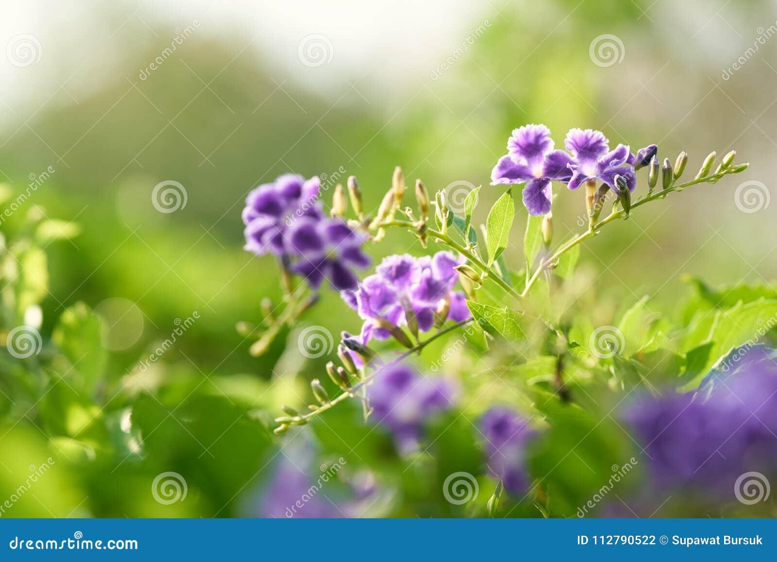 Closeupnatursikten av det gröna bladet är tillväxt upp på suddig grönskabakgrund i trädgård genom att använda som naturliga gröna