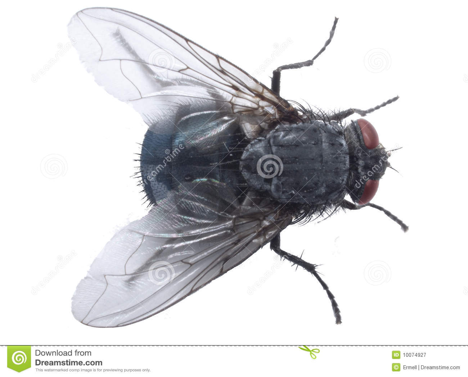 Closup da mosca