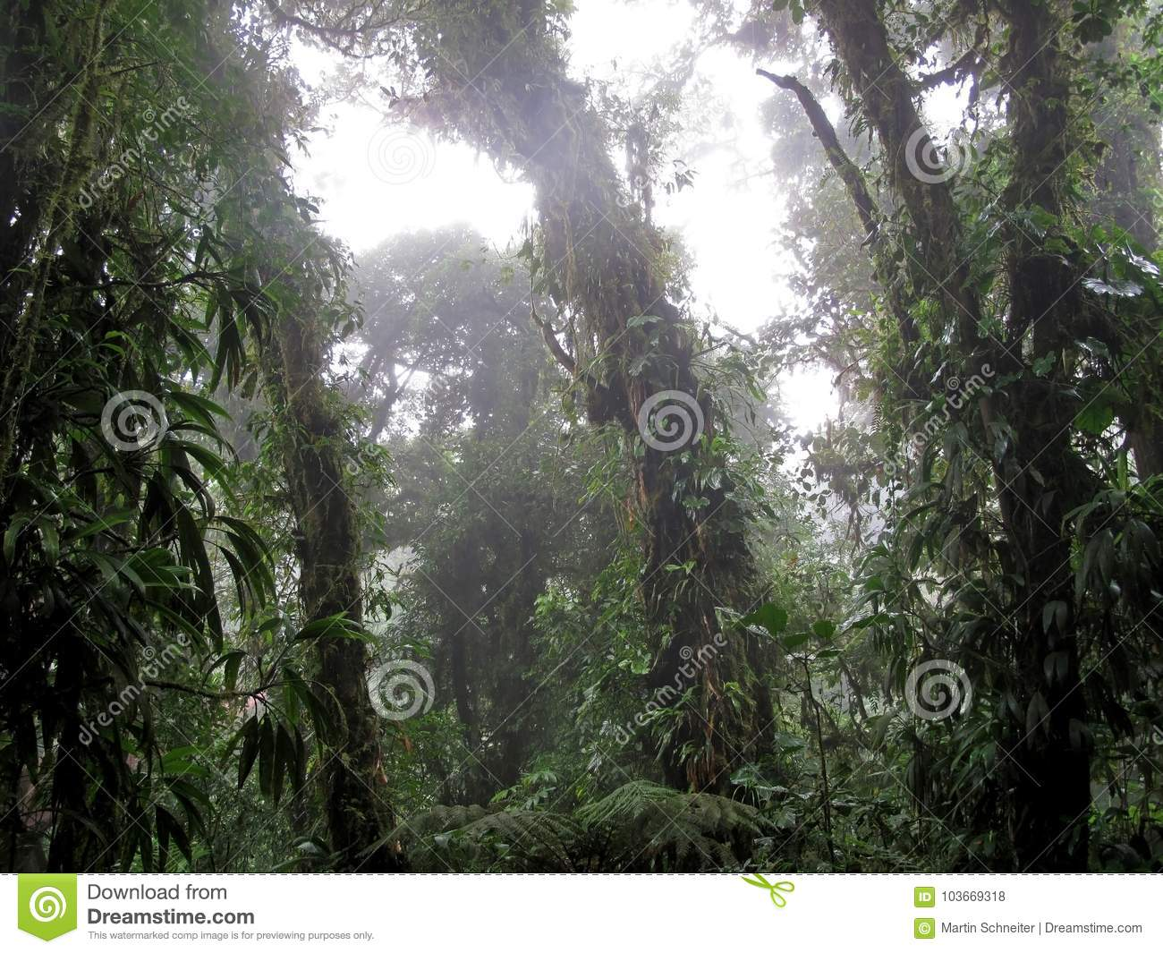 Cloud Forest Of Reserva Biologica Bosque Nuboso Monteverde Costa Rica Stock Photo Image Of Misty Conservation 103669318