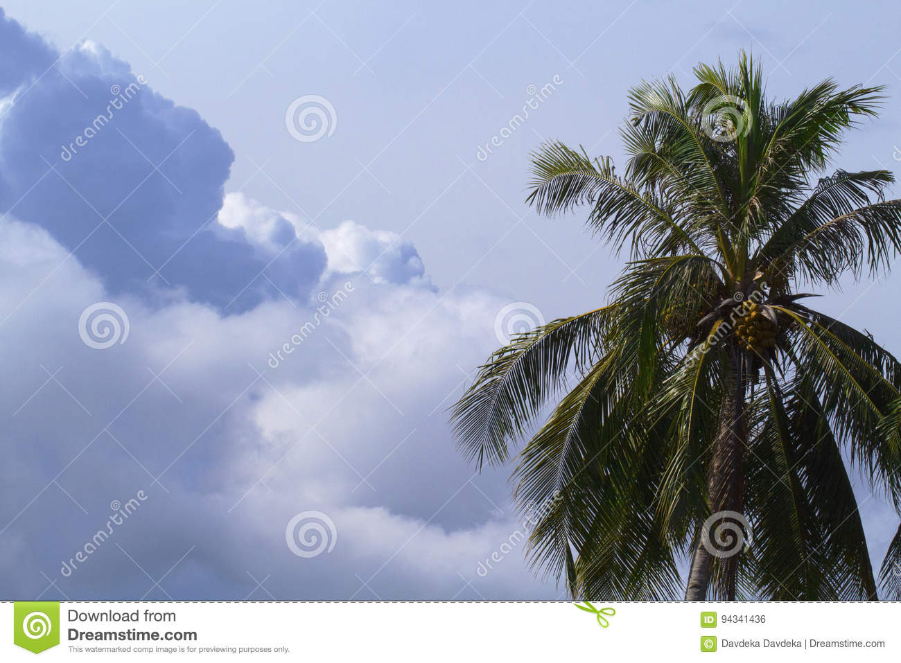 Tropical Island Beach Ambience Sound: Cloud On Sky And Palm Tree Crown. Skyscape With Big Cloud
