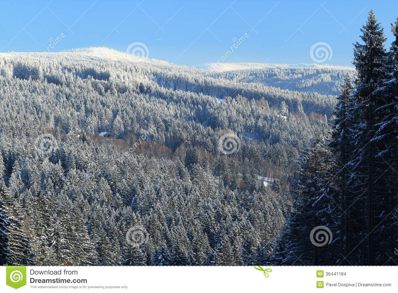 Cloudes And Trees Winter Landscape In Umava In Pič 225 K