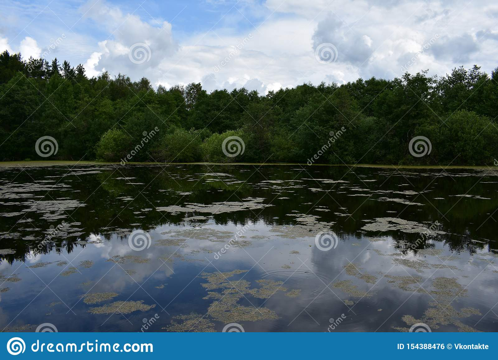 Clouds in the blue sky above the forest smooth pond lake reflected in the water, low bowed tree branches
