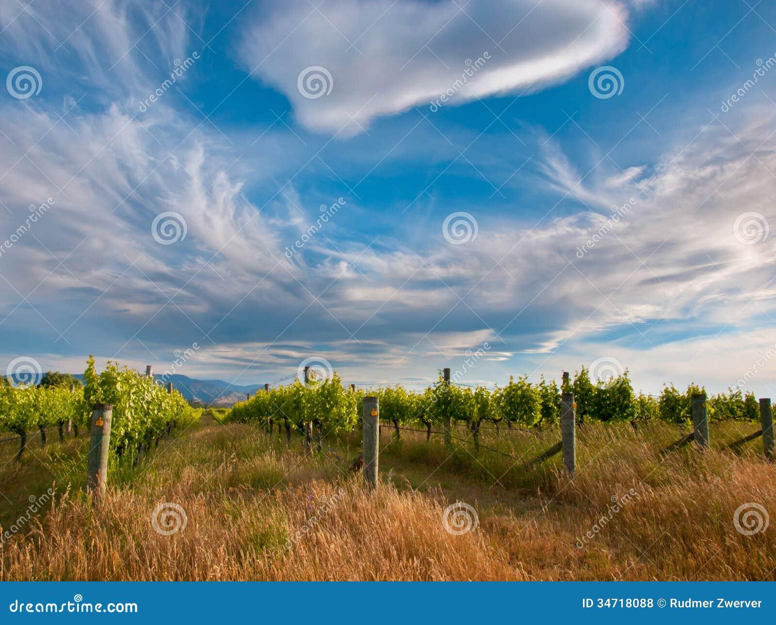 Cloudscape acima do vinhedo na área Nova Zelândia de Marlborough