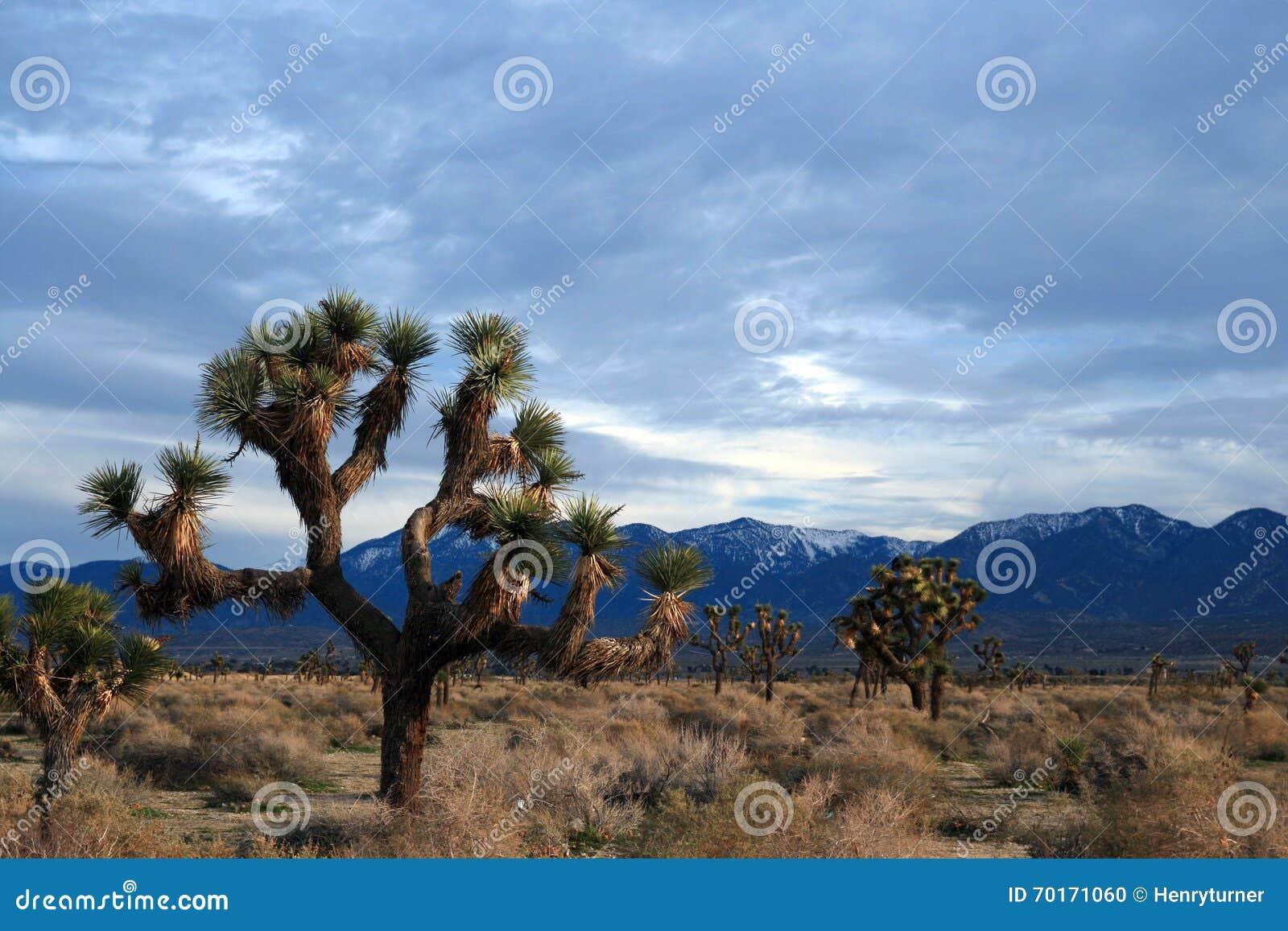 Cloudscape de Joshua Tree en el alto desierto meridional de California cerca de Littlerock California