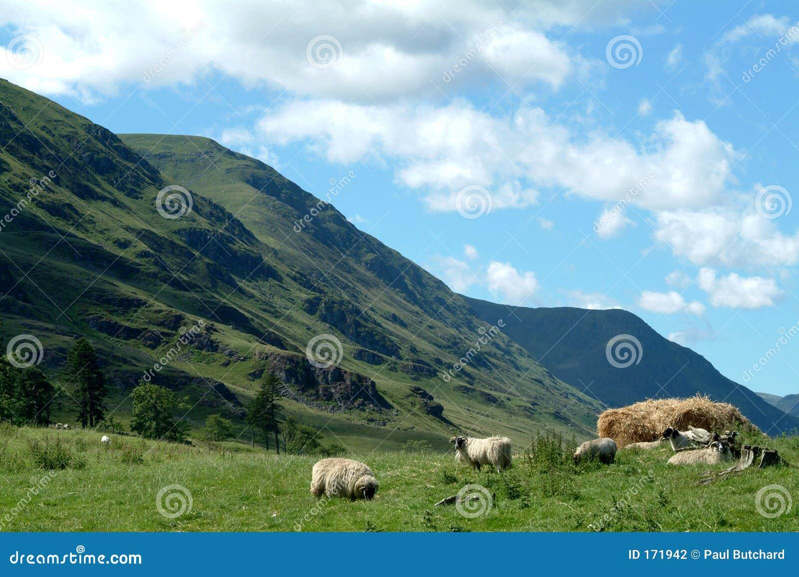 Clova幽谷苏格兰