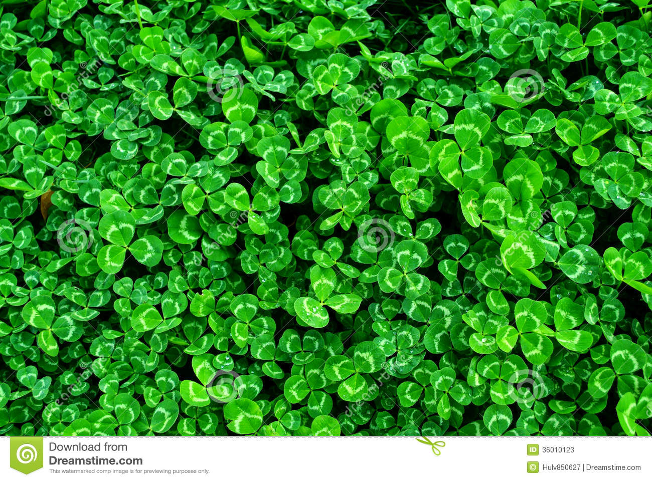 Clover Field Background Stock Photos - Image: 36010123