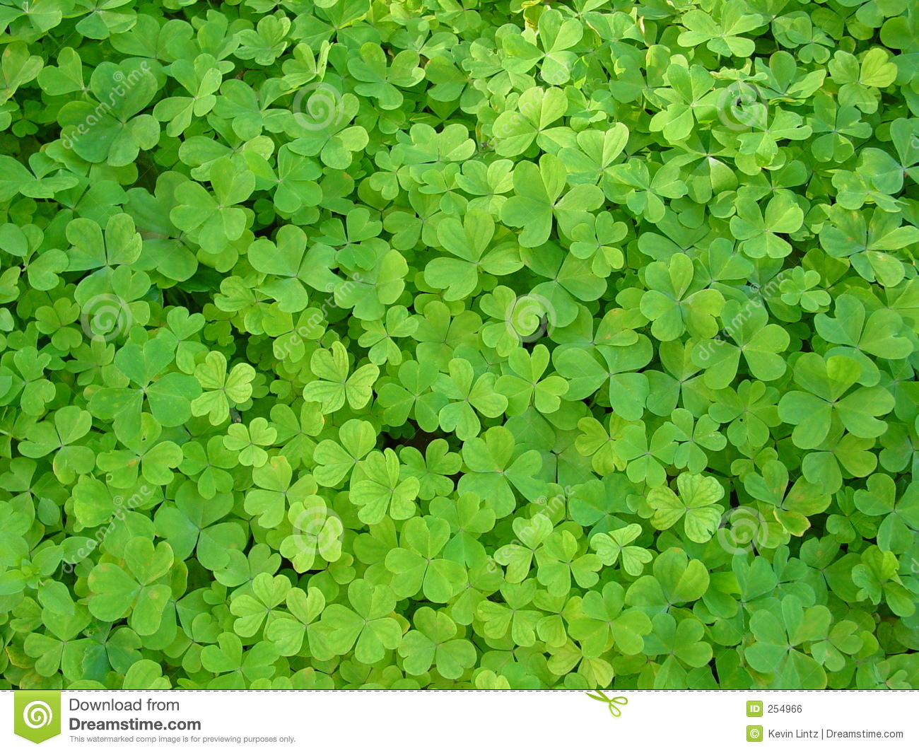 Clover Patch Royalty Free Stock Image - Image: 254966