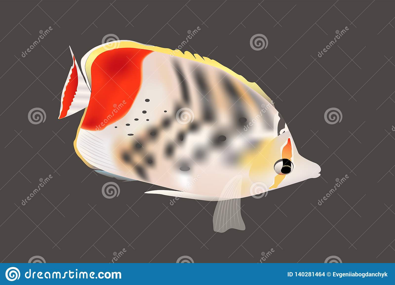 Clown Butterfly Fish Closeup, vector sea ocean