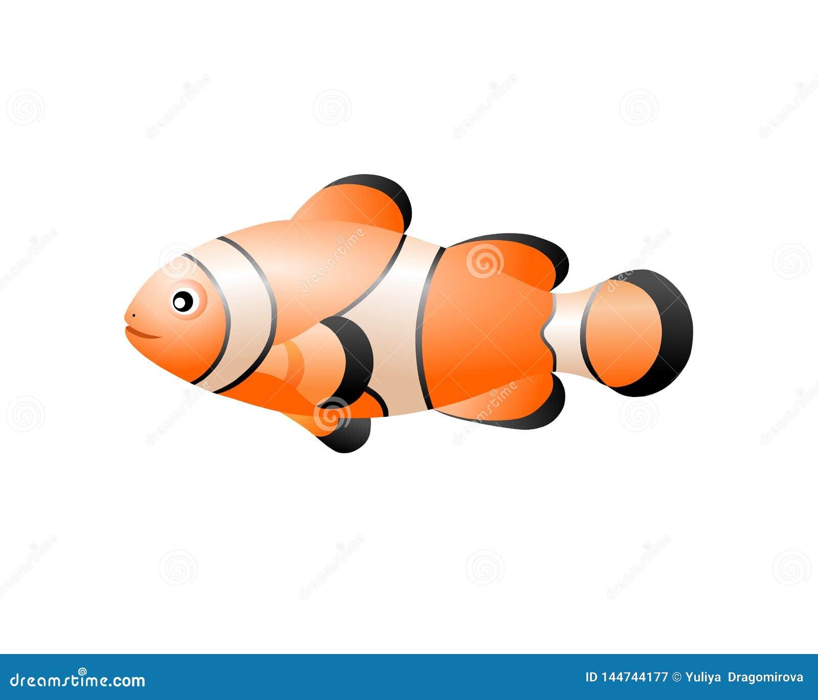 Clown  tropical fish for your aquarium