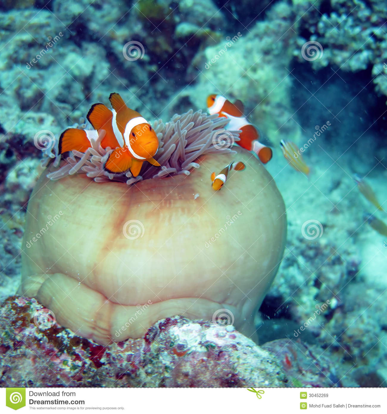 Clown fish finding nemo royalty free stock images image for Finding nemo fish