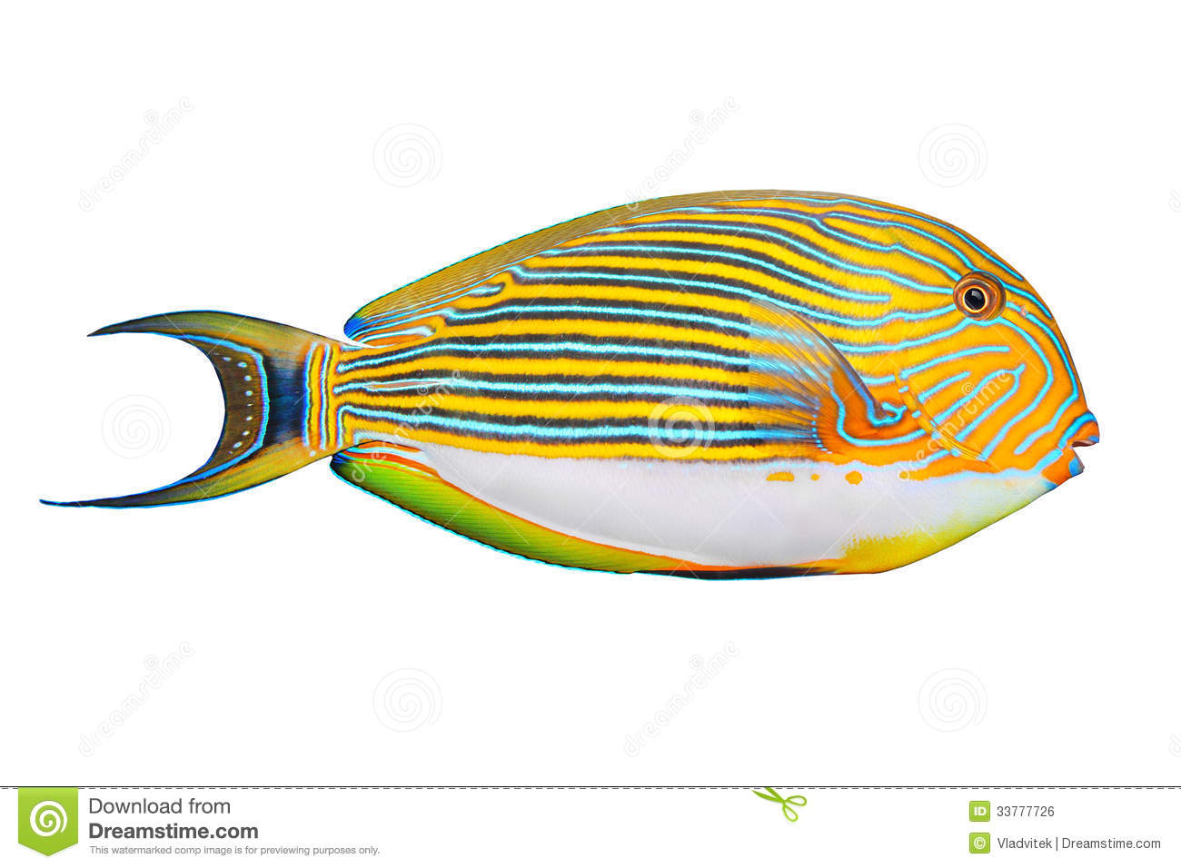 The Clown Surgeonfish (Acanthurus Lineatus). Royalty Free Stock Image ... Pacific Ocean Underwater Map