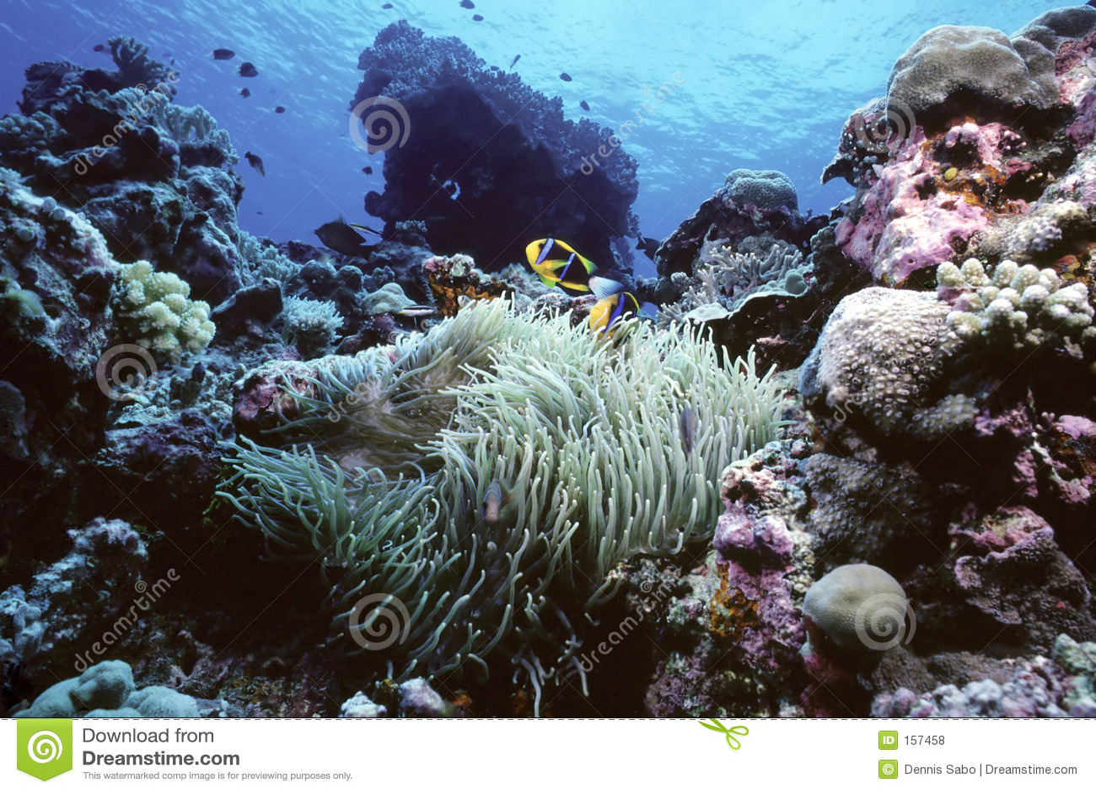 Clownfish礁石