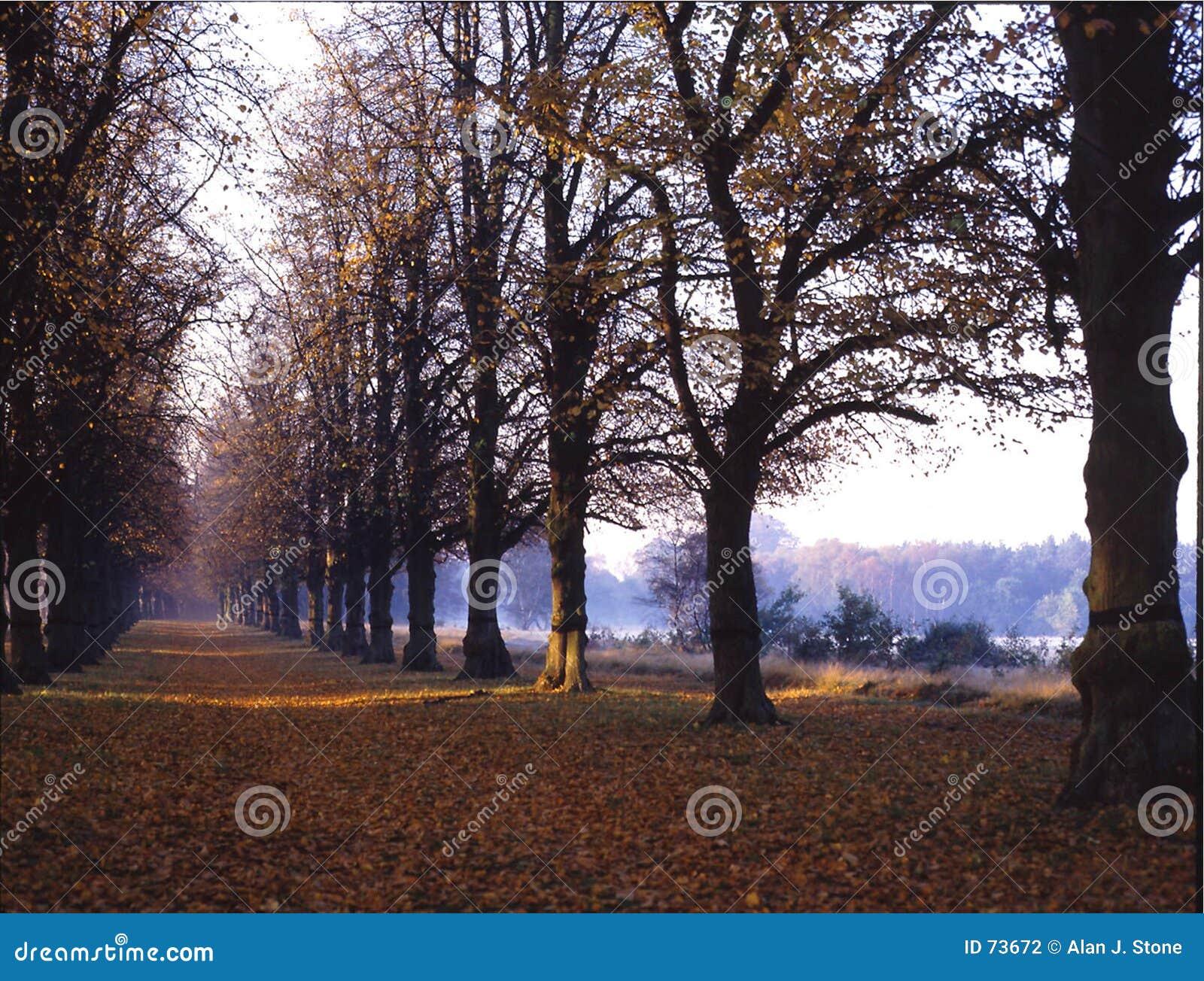Clumber περίπατος δέντρων πάρκων ασβέστη της Αγγλίας