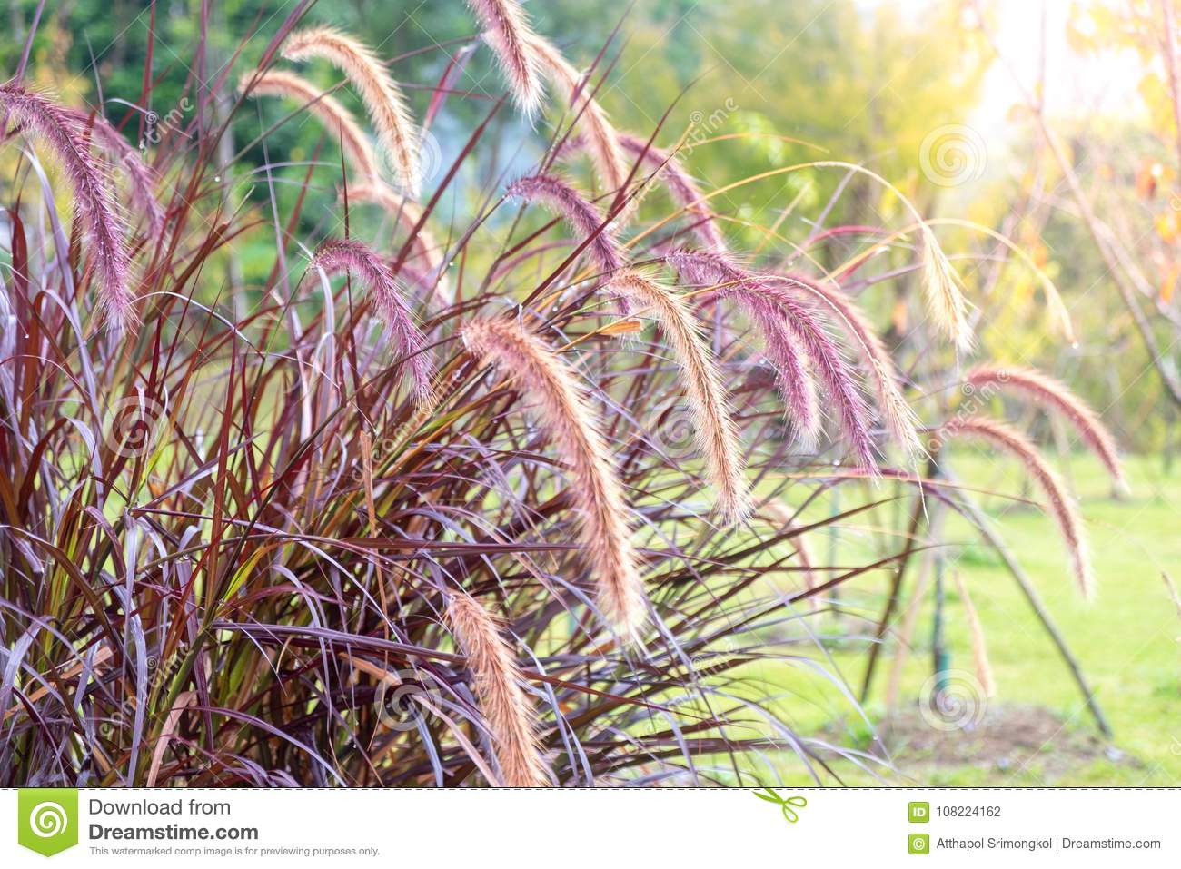 Clump grasses, flowers and grass in the morning with sun light