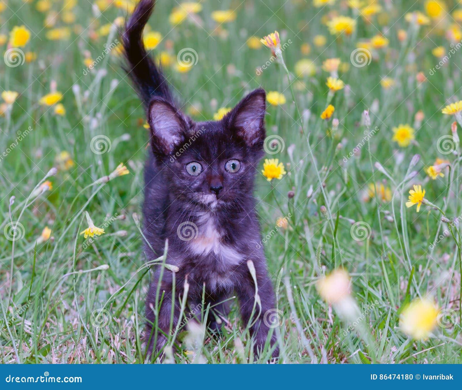 Clumsy little kitten on the