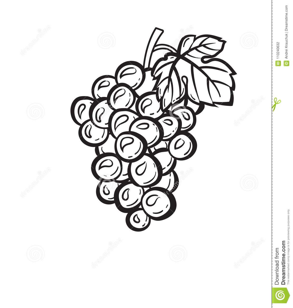 Cluster Of Grapes Hand Drawn Sketch Icon. Stock Vector ...