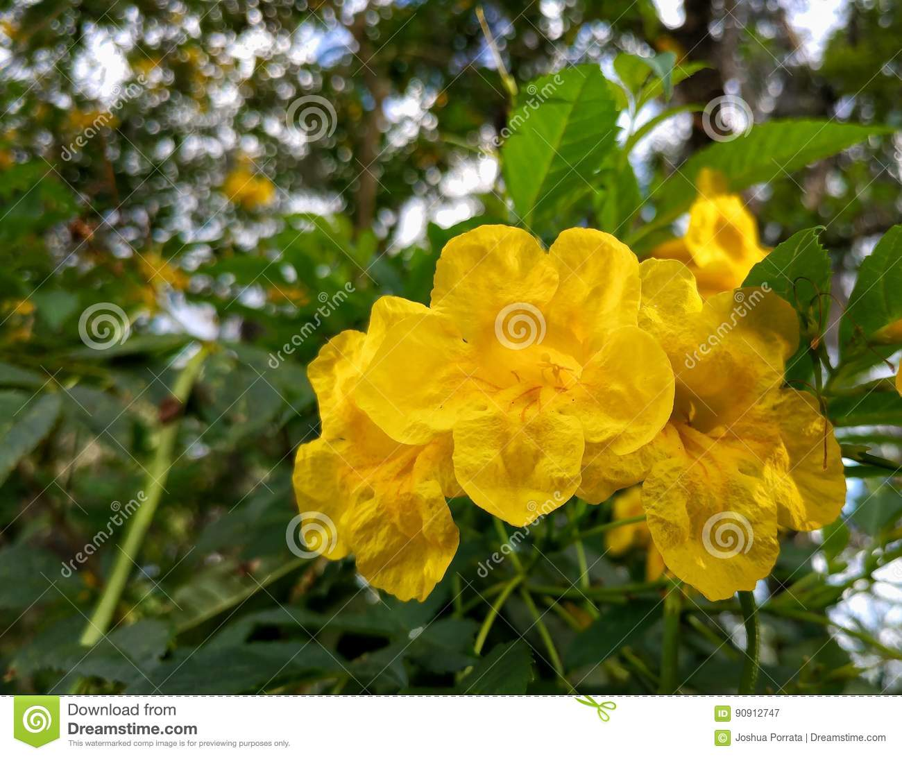 A Cluster Of Imperfect Yellow Florida Flowers Stock Image Image Of