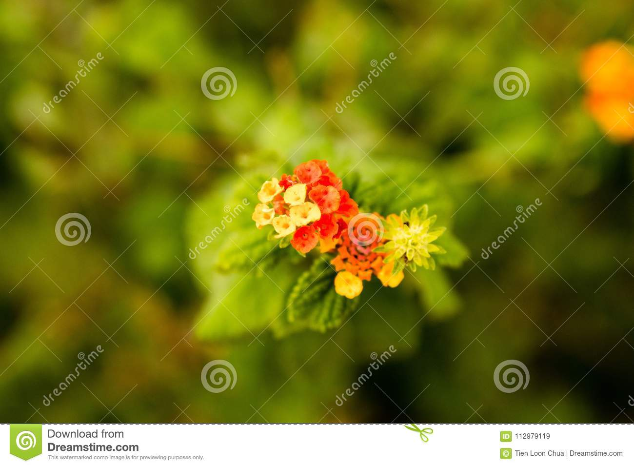 Cluster or red, orange and yellow flowers