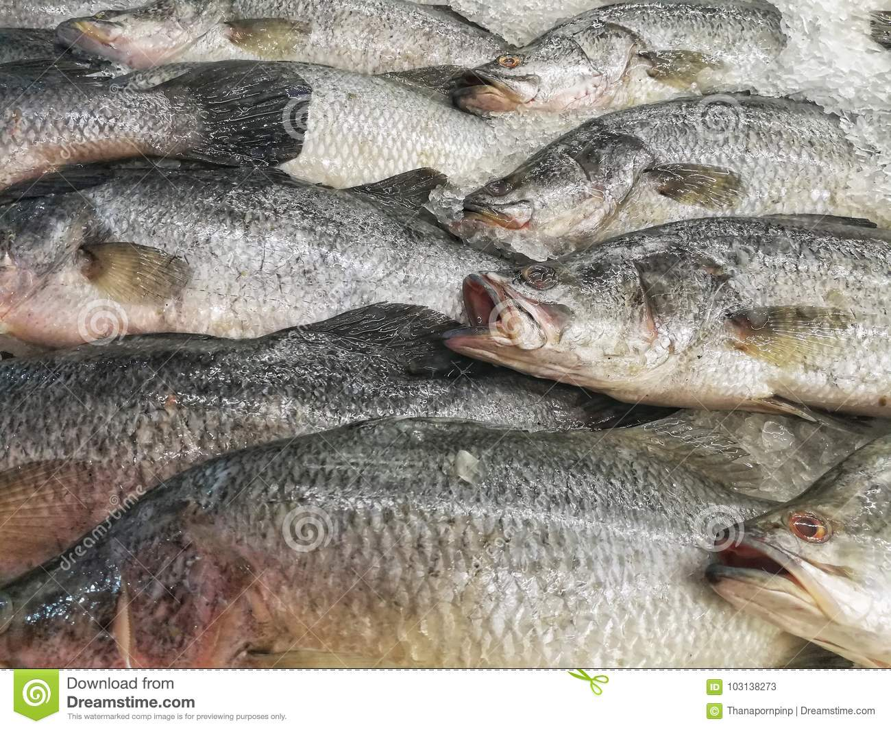 Cluster of sea bass for sale at supermarket stock image for Bass fish for sale