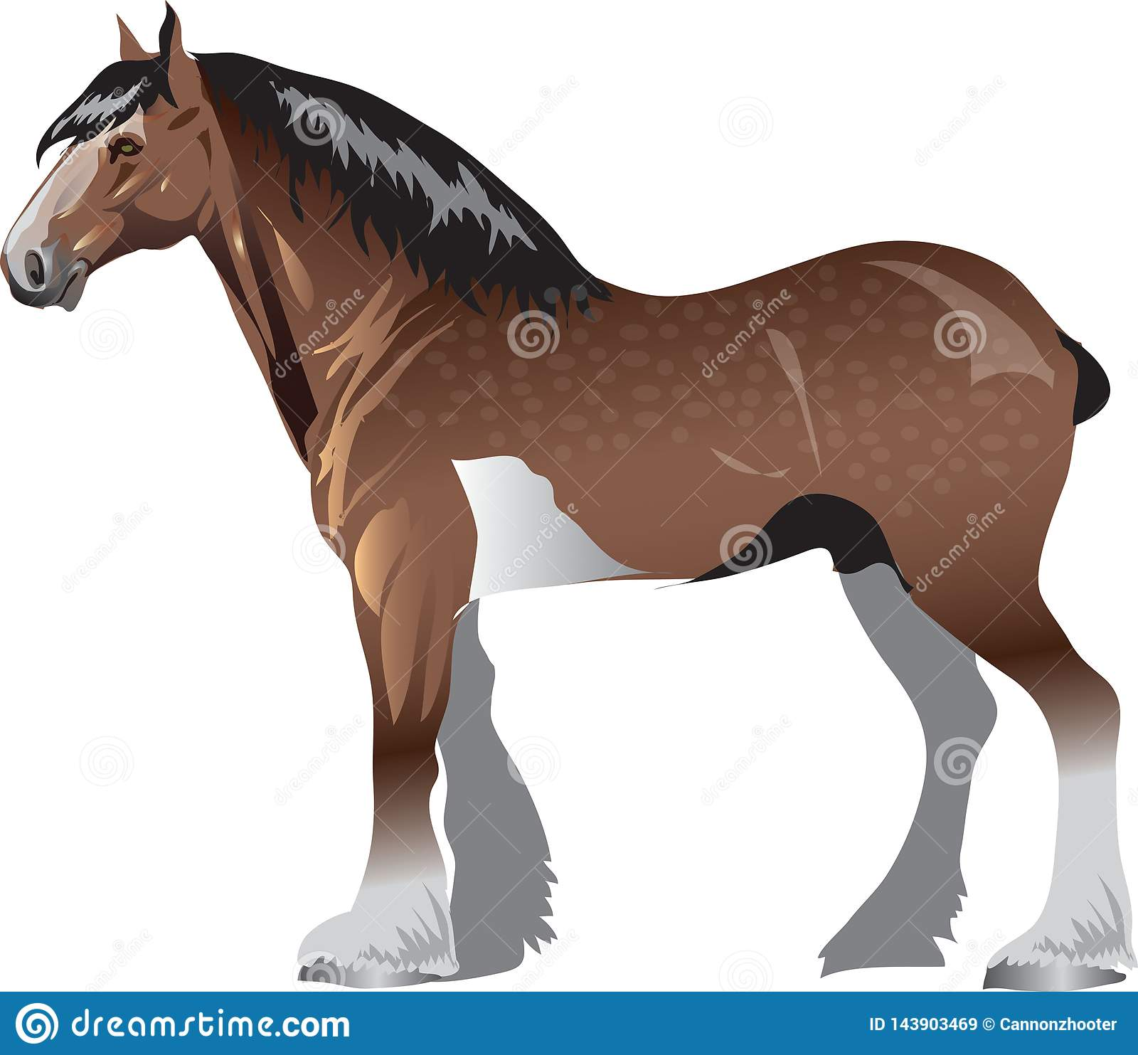 Clydesdale Horse Stalion Galop Animal Vector Illustration Stock Vector Illustration Of Speed Named 143903469