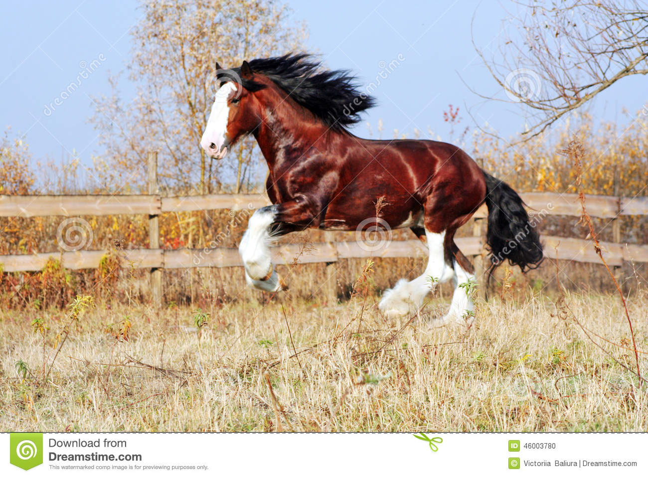 clydesdale horse stock photo image 46003780 stallion clipart free white stallion clipart