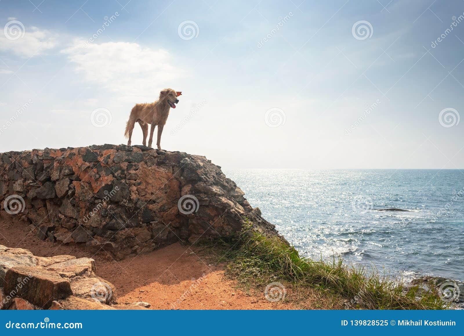 Собака свободы Пребывание собаки на утесе и потеха иметь на океане, море