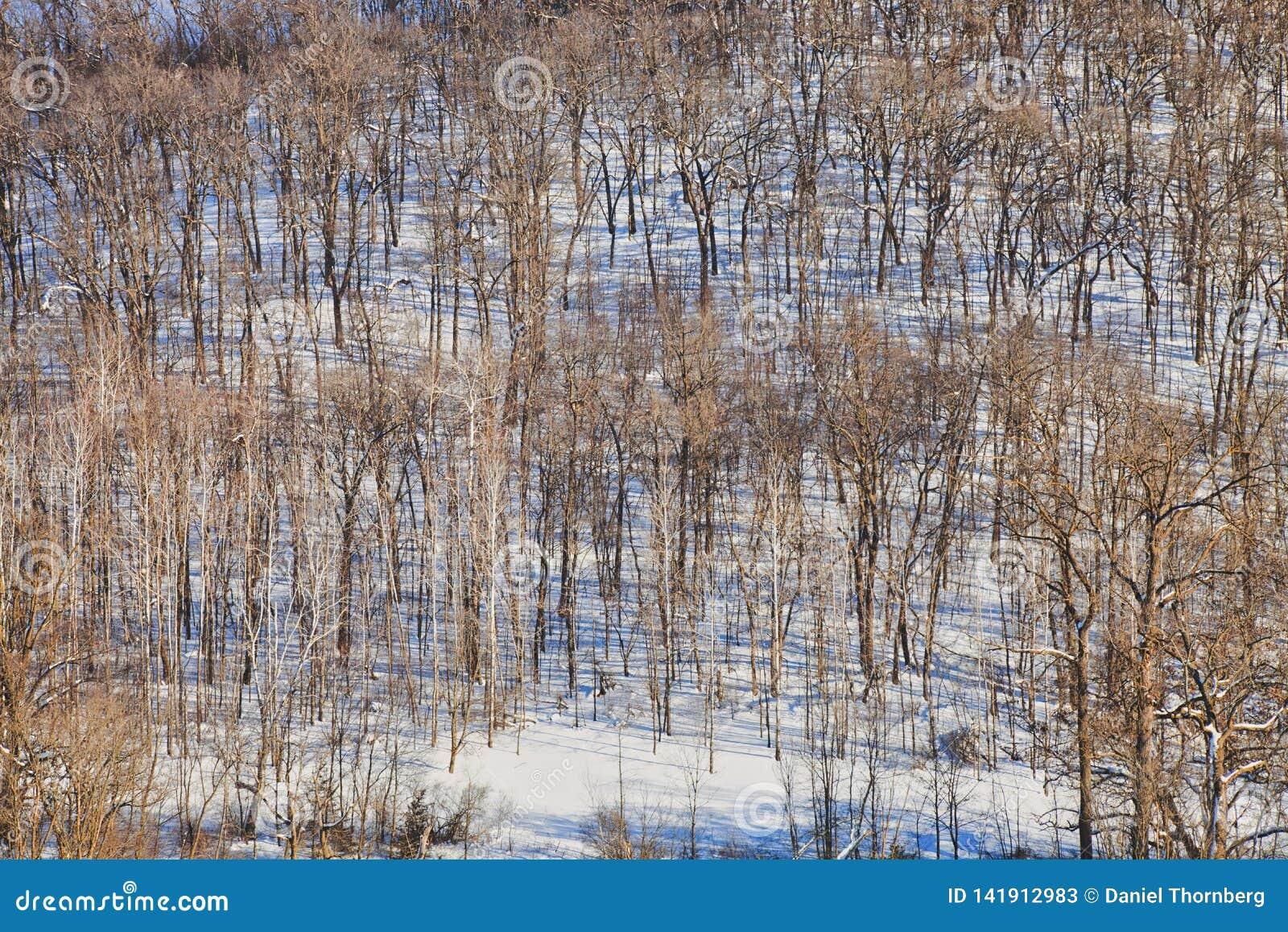 Солнечный горный склон с деревьями в снеге