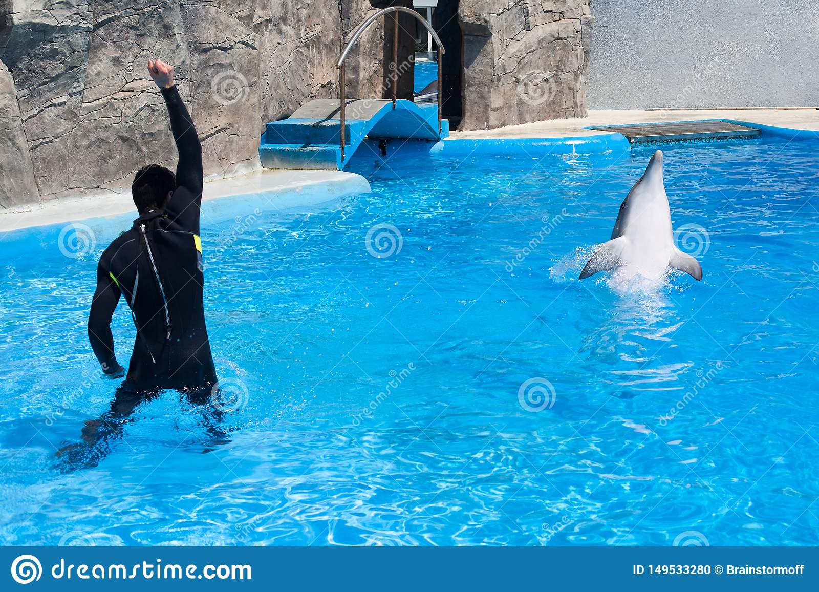 Coach trainer man in black diving suit and dolphin in water pool in dolphinarium with blue water, coach teaches dolphin to jump