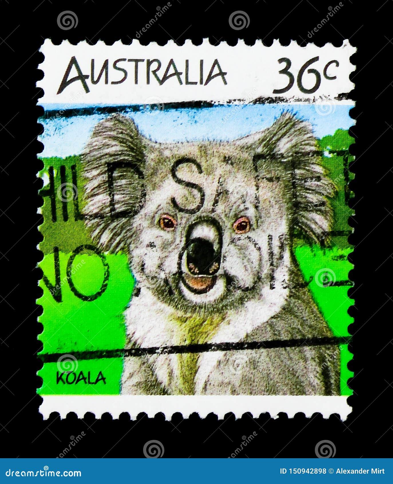 Coala (cinereus) do Phascolarctos, serie australiano dos animais selvagens, cerca de 1986