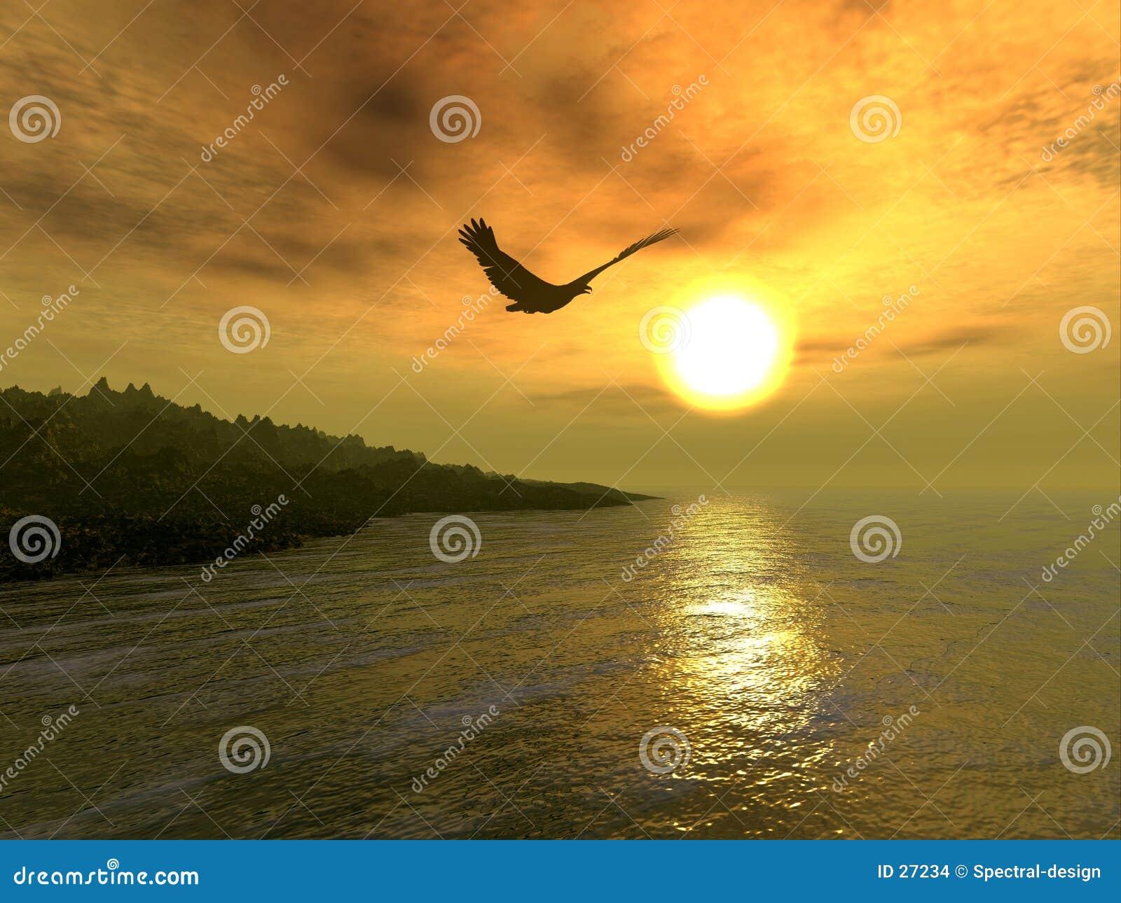 Coast eagle