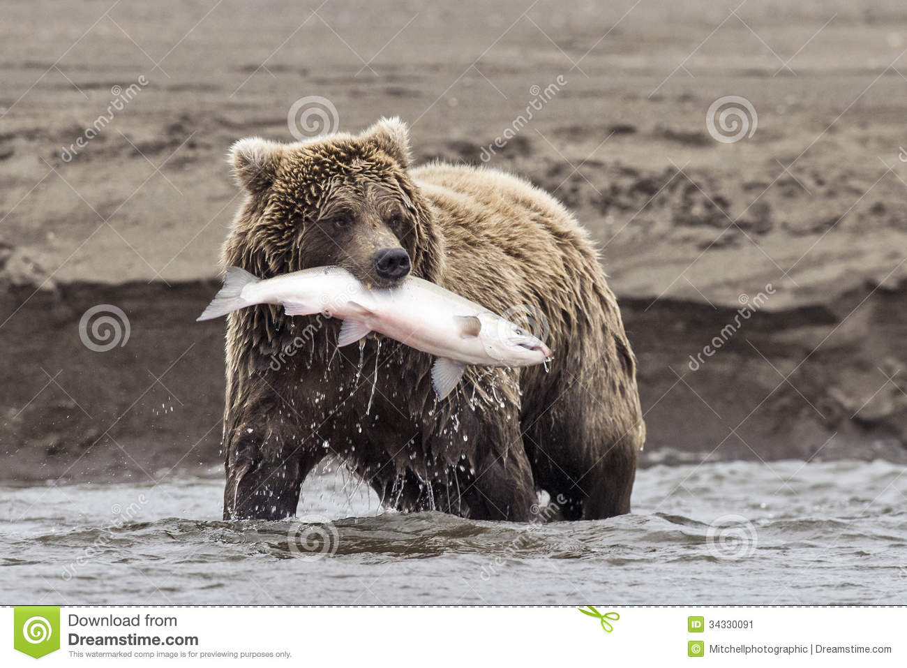 how to catch a bear in scarborough