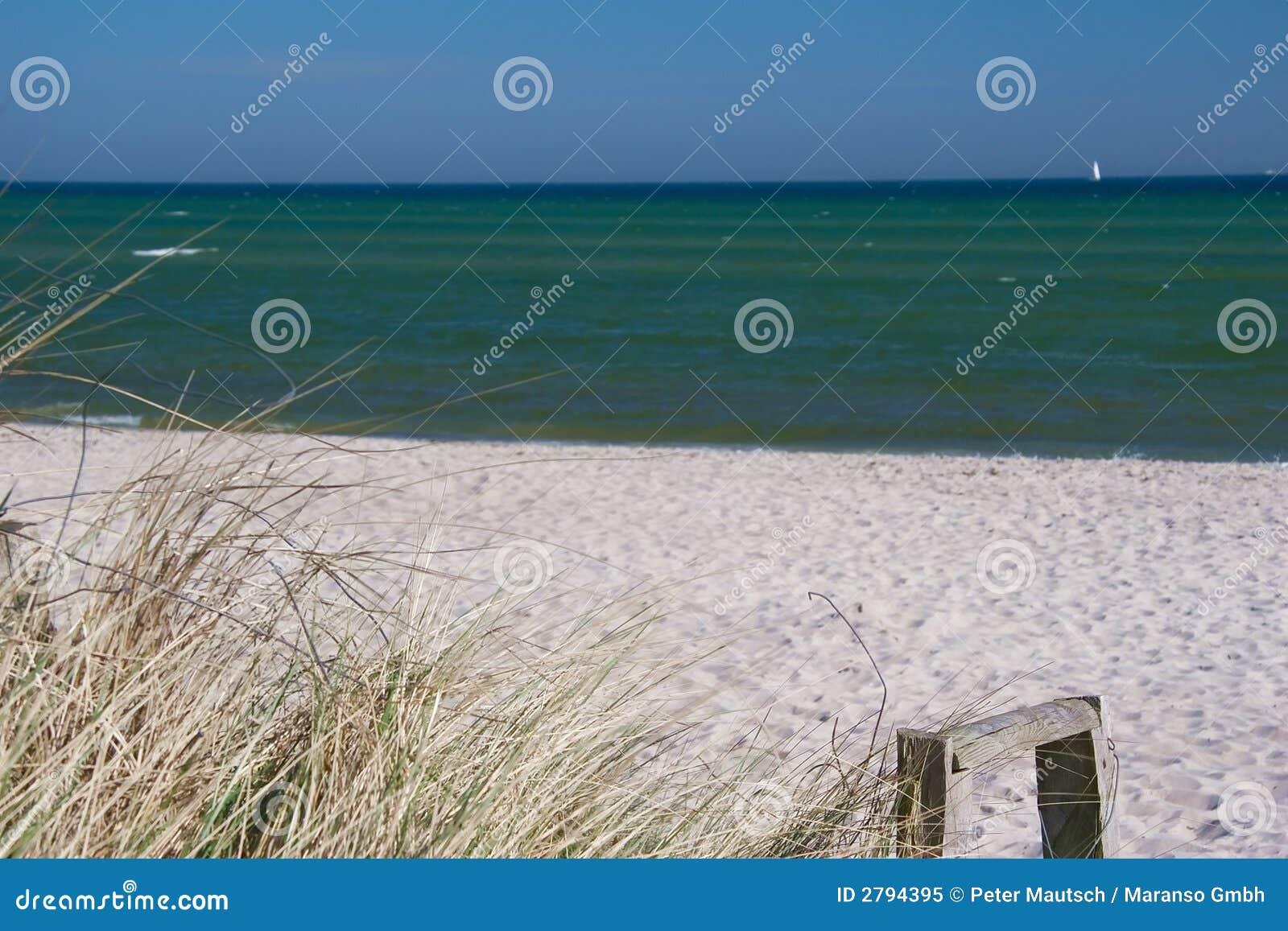 Coastline with dunes