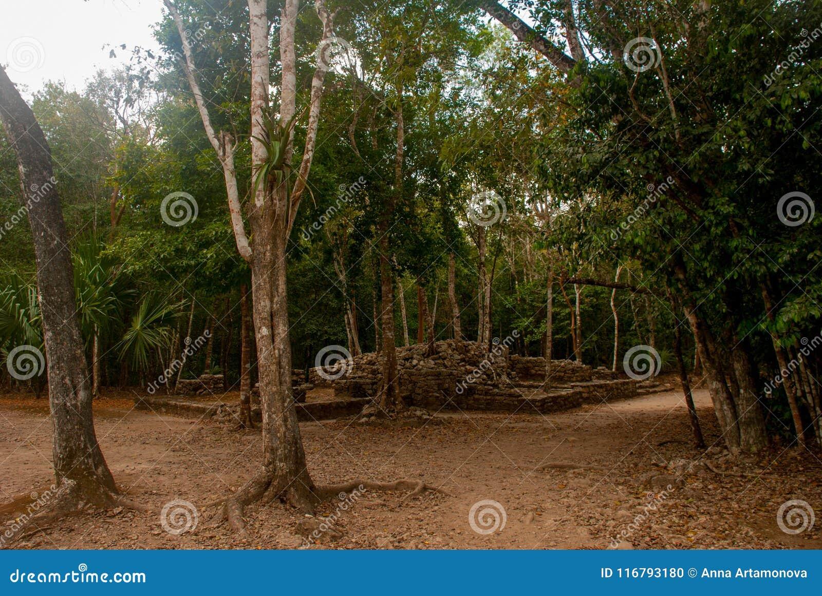 Coba, Mexico Oude mayan stad in Mexico Coba is een archeologisch gebied en een beroemd oriëntatiepunt van het Schiereiland van Yu