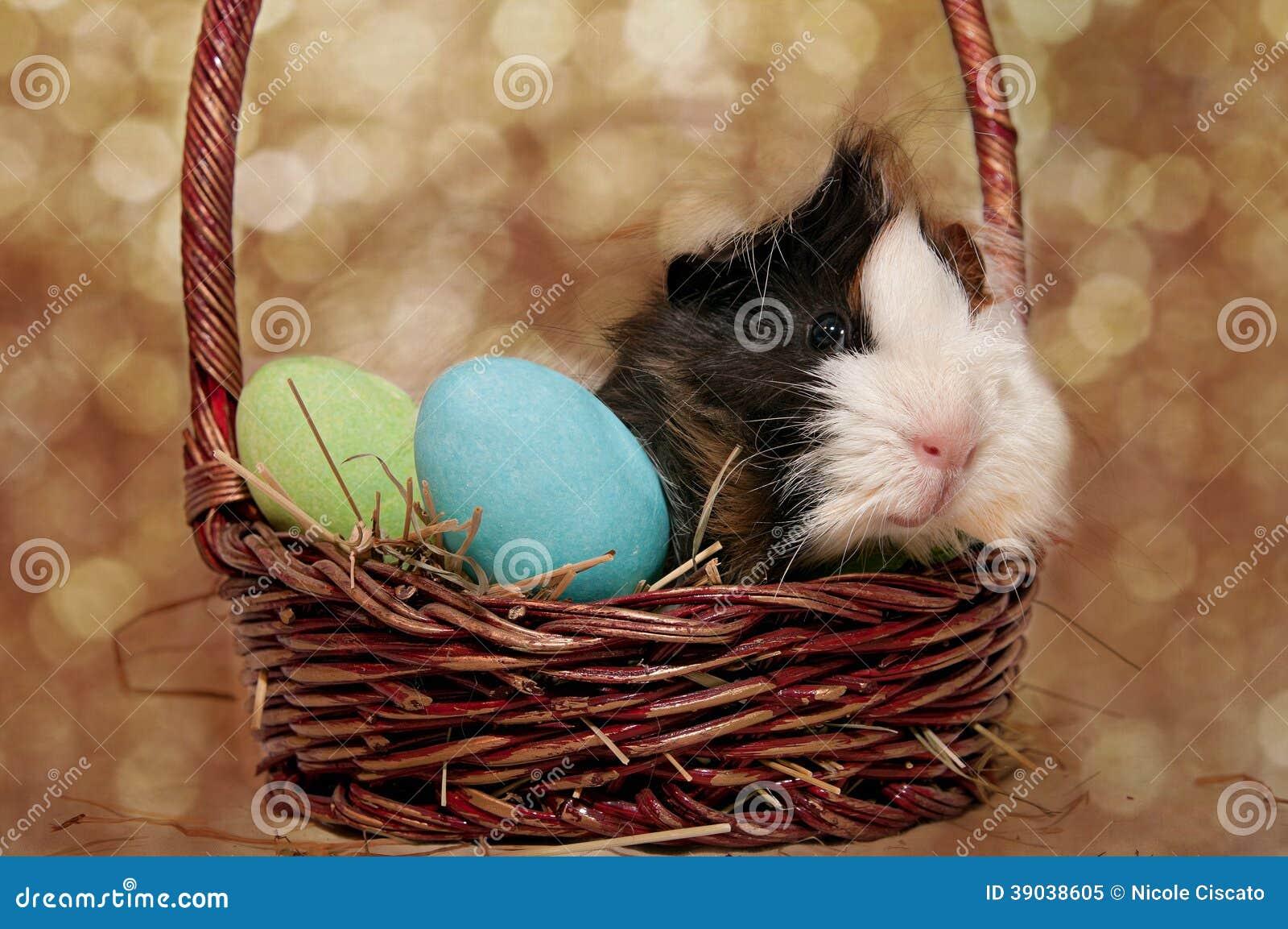 Cobaye de Pâques dans un panier