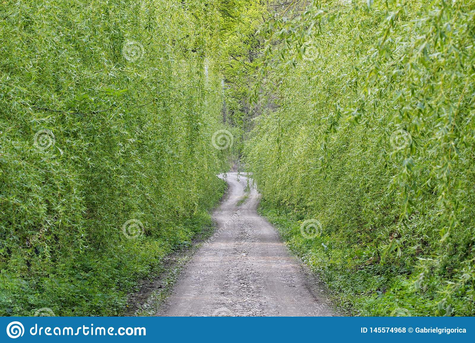 Streets Of Willow >> Cobbled Streets Among Willow Trees Stock Photo Image Of