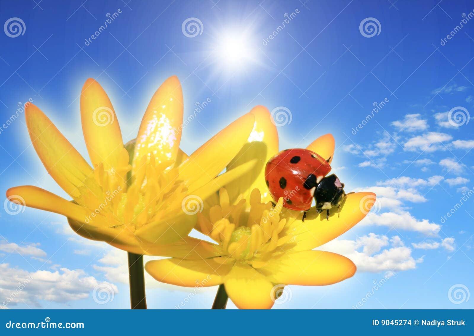 Coccinella su un fiore immagini stock immagine 9045274 - Coccinella foto gratis ...