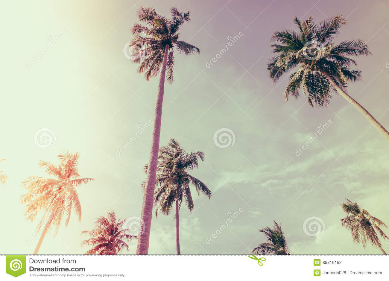 Cocco sopra cielo blu (Annata elaborata immagine filtrata