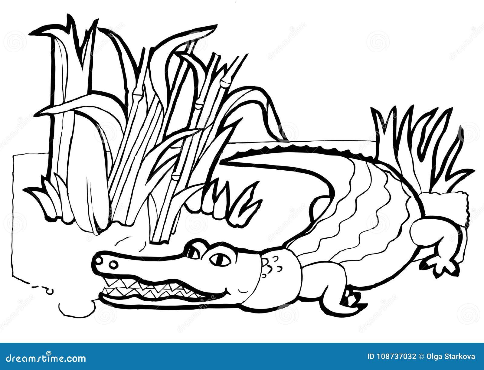 Coccodrillo libro da colorare versione in bianco e nero for Coccodrillo da colorare