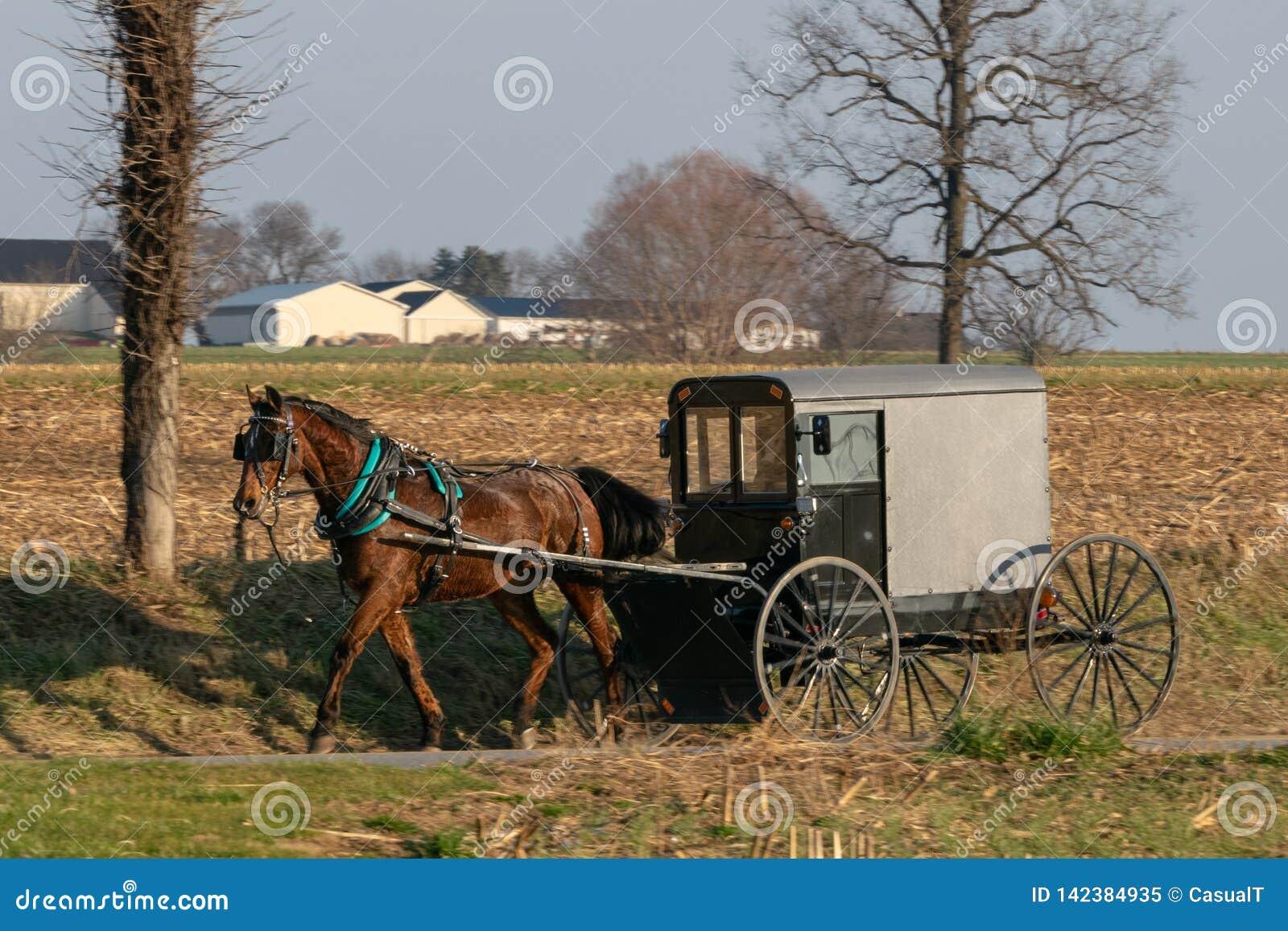 Cochecillo dibujado por un caballo marrón hermoso, el condado de Lancaster, PA del caballo de Amish