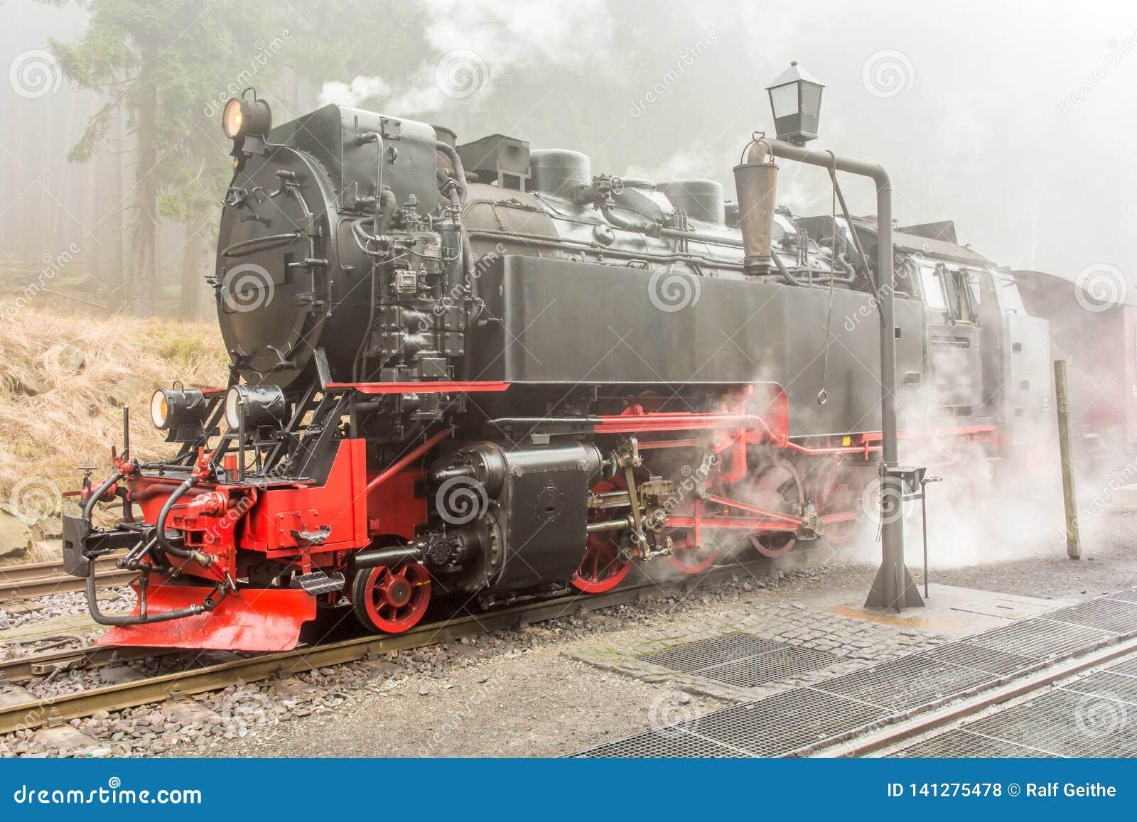 Cocido al vapor de la locomotora de vapor al vapor en un bosque en niebla