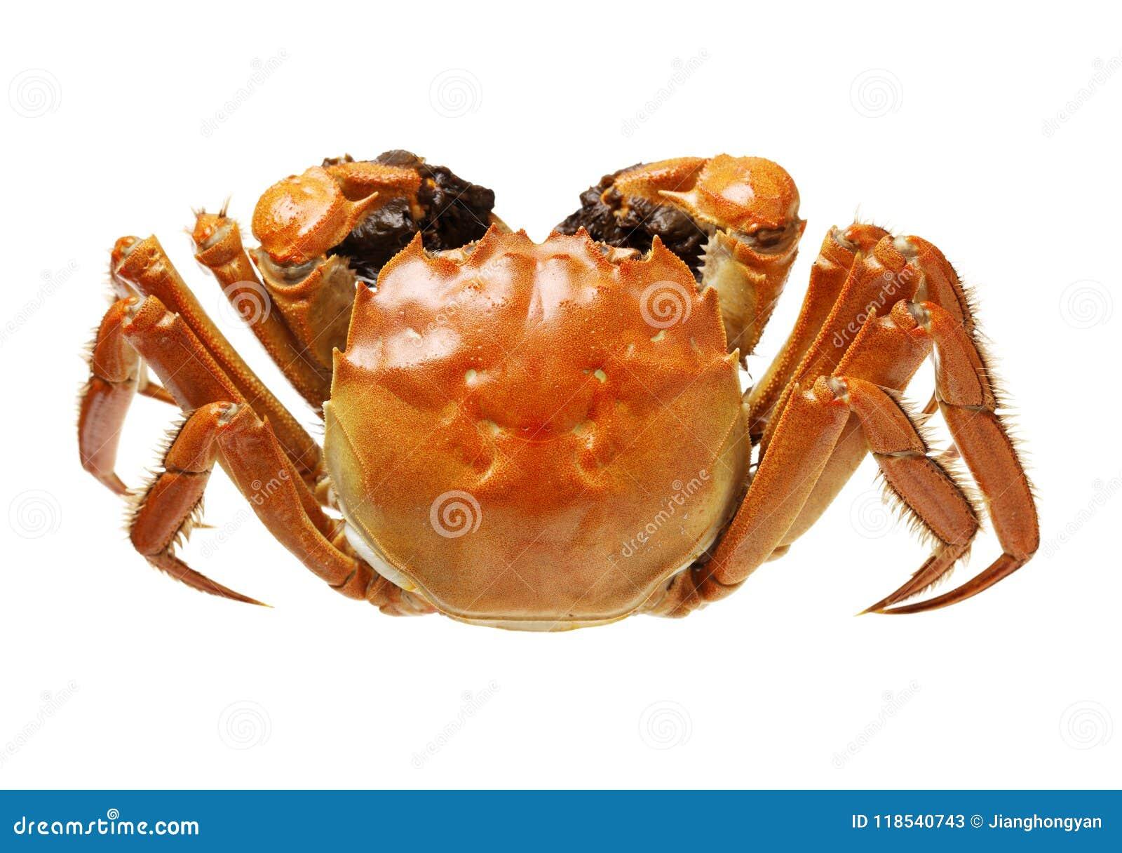 Cocido al vapor de los cangrejos melenudos de Shangai al vapor, cocina china