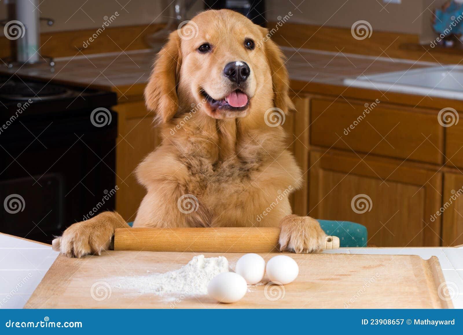 Cocinar el perro