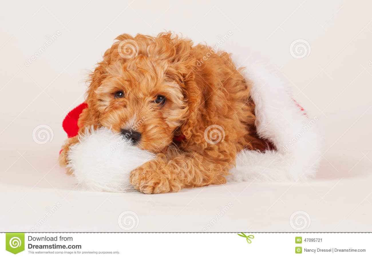 Dog Breed Christmas Cards