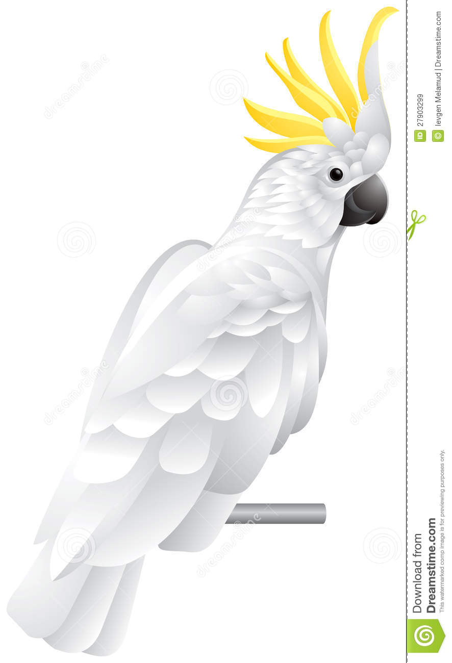 Royalty Free Stock Images Cockatoo Parrot Image27903299 on banana cartoon character