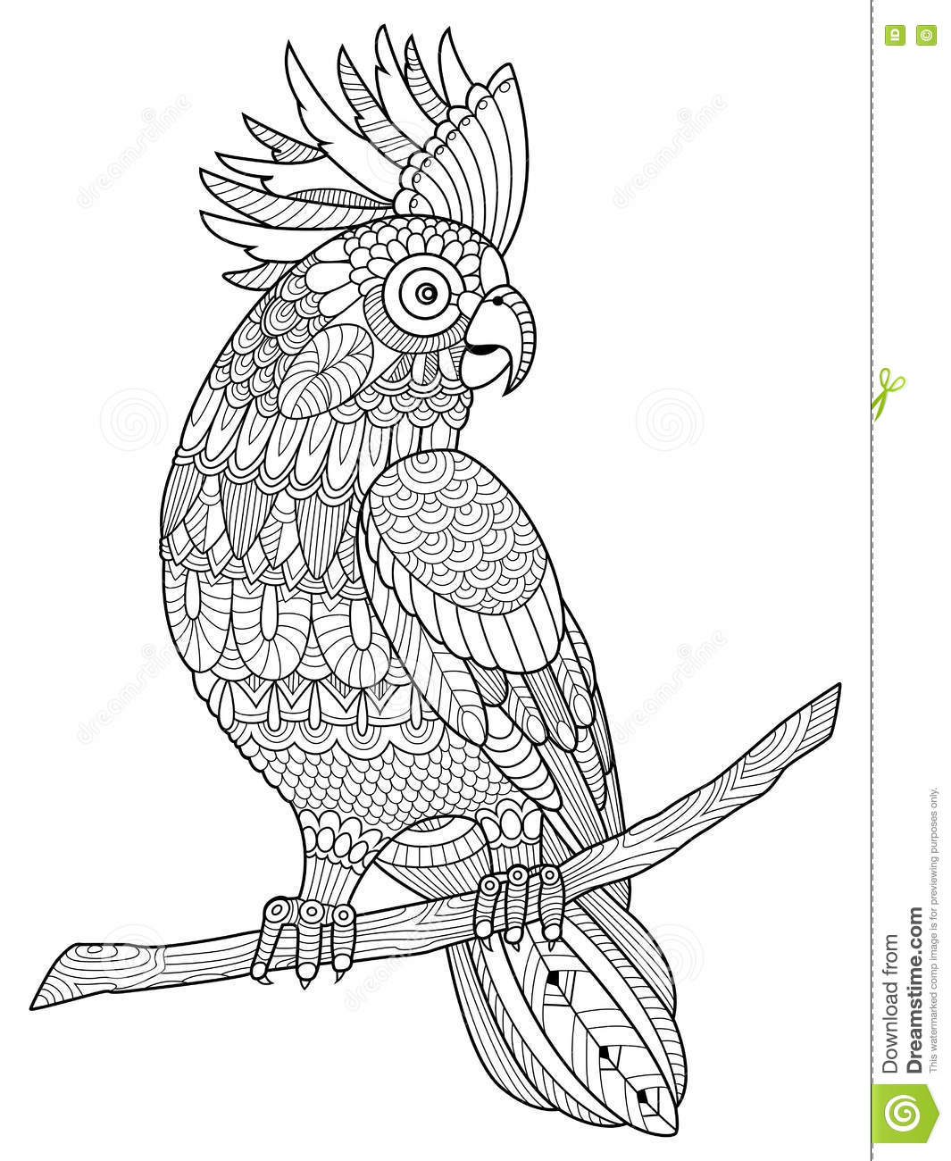 parrot coloring vector for adults vector illustration